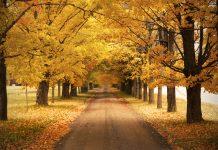 پاییز معتدل کانادا