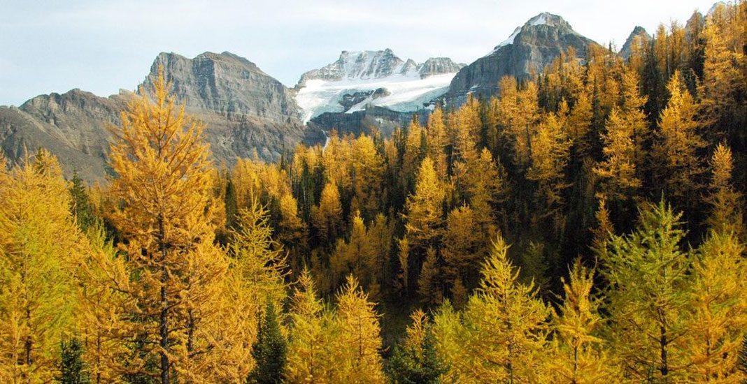 تفرجگاه دیدنی برای تماشای درختان زیبای کاج