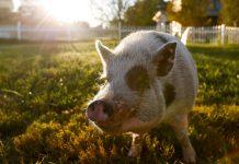 حیوانات حامی عواطف انسانی