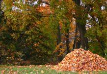 برگهای پاییزی