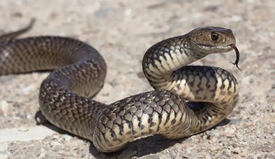 SnakesNEW